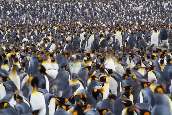 为什么企鹅是世界上最可爱的动物