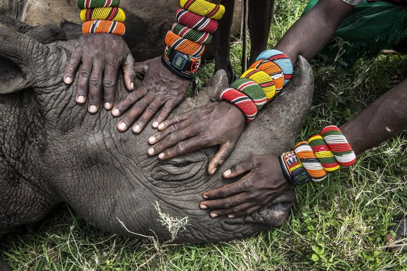 自然类单幅二等奖:拯救非洲大型动物-失去双亲的犀牛