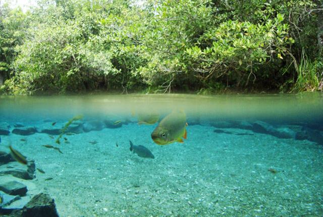 世界上最干净的水在哪里?