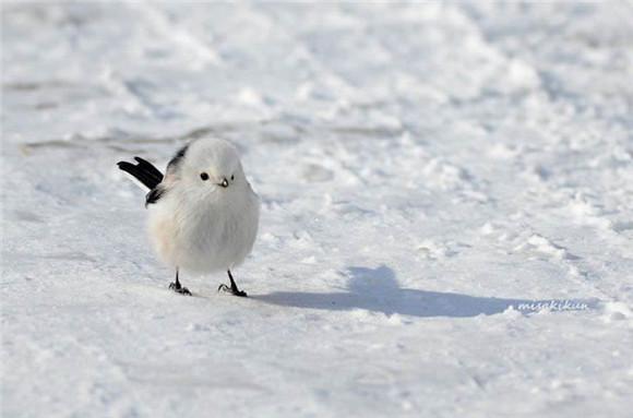 这7种萌萌的小动物,只能在日本北海道看到
