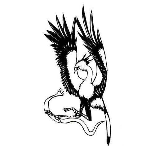 鹰手绘线稿