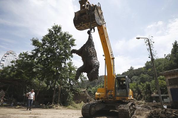 格鲁吉亚动物园逃跑老虎咬死人