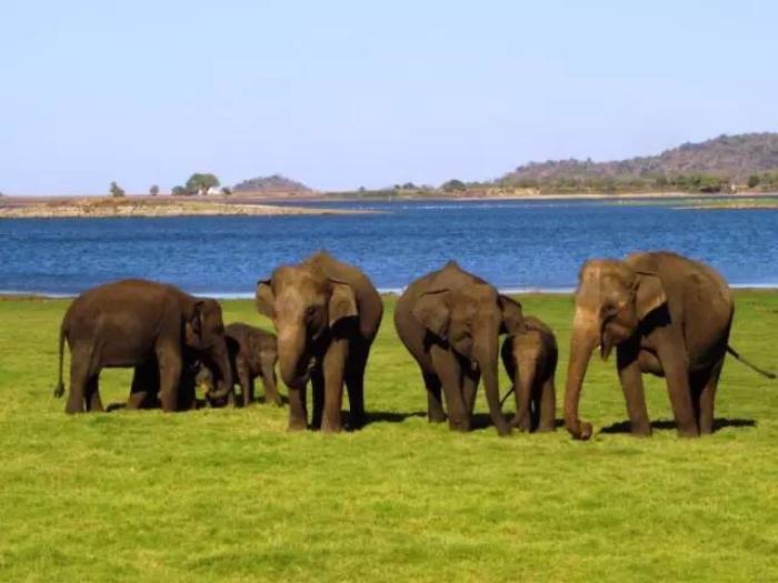 """做为马尔代夫的""""邻居"""",斯里兰卡实在是不够出名。但斯里兰卡全年25-30度的天气凉爽宜人,其实非常适合休闲度假! 这里小编为您提供14种大开眼界的斯里兰卡体验,颠覆你对海岛的固有印象! 1.有全世界最牛的钓鱼方式,《孤独星球》力赞!  2009年《孤独星球旅游者》手册的封面刊登了一张海边钓鱼者的照片。在斯里兰卡,Galle附近的koggala一带浅海沿岸,祖祖辈辈都采用这种独特的捕鱼方式,曾经渔夫们穷的买不起船,就发明了踩着高跷捕鱼的方法,分分钟就能钓上不少鱼。这种""""世"""