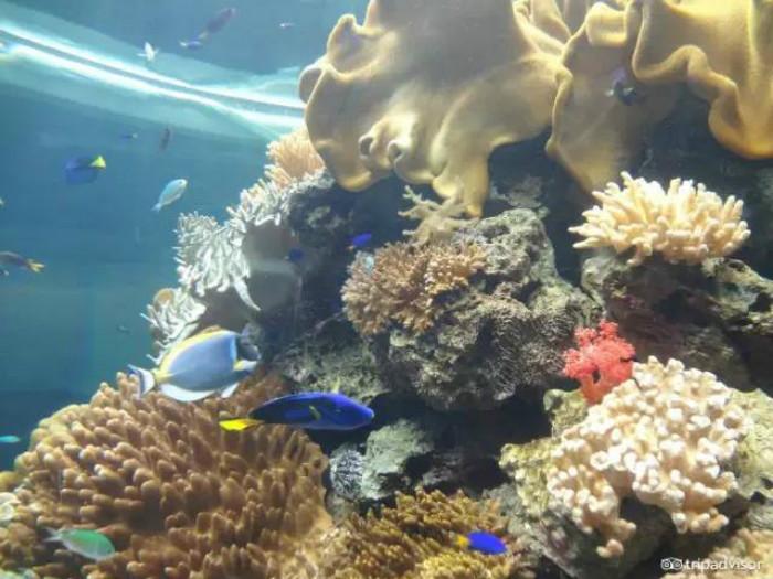 国立海洋生物博物馆  台湾
