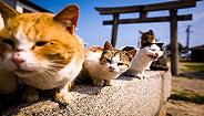 这儿有一份工作:可以在美丽的希腊岛屿上撸猫
